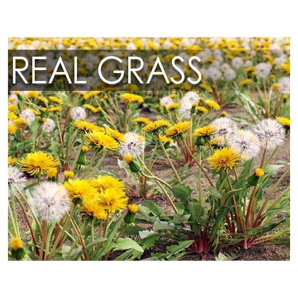 Real Grass | VizPark