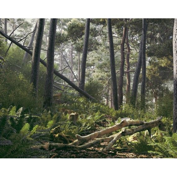 Archmodels vol. 182 - Forest Collection