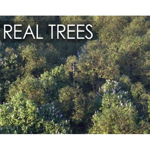 Real Trees