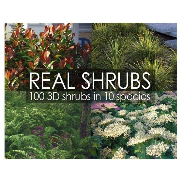 VP Real Shrubs